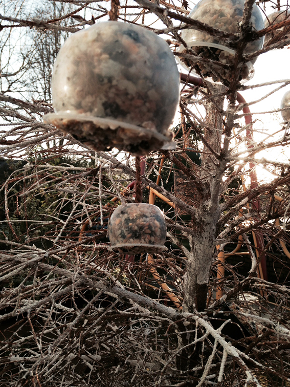 Homemade bird feeder hanging from a dried out Christmas tree
